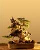 Kínai boróka (juniperus chinensis)